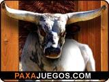 Bucking Bull Racing